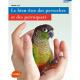 Le bien-être des perruches et des perroquets