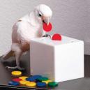 Boite du prof pour perroquet