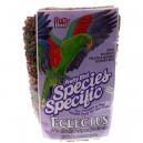 Pretty Bird Eclectus