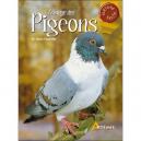 Élevage des pigeons