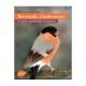 Bouvreuils chardonnets et autres petits oiseaux européens