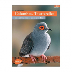 Colombes, Tourterelles et autres petits colombidés