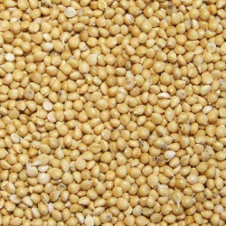 Graines de millet Jaune