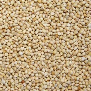 Millet Blanc 25 kg