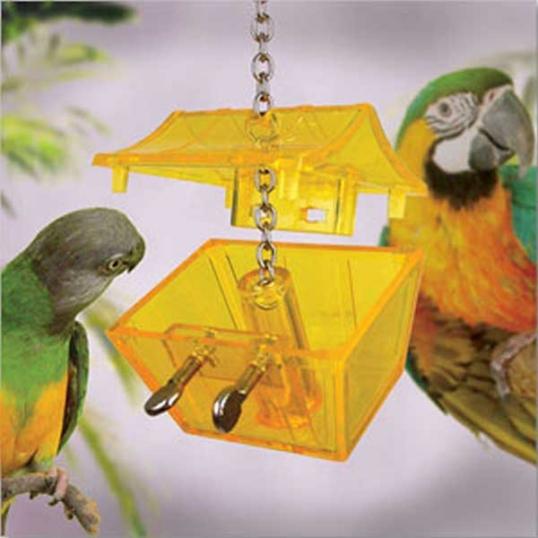 Coffre au trésor perroquet