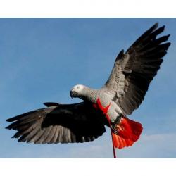 Harnais Aviator Gris du Gabon