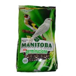 Manitoba Haute Germination