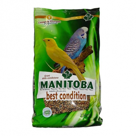 Manitoba Best Condition