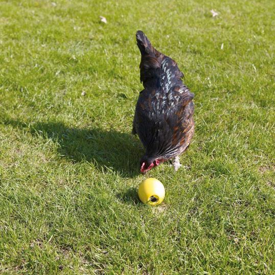 Chicken Fun balle alimentaire