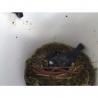 Nichoir BreedR oiseaux du jardin