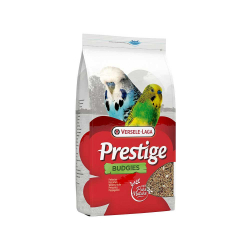 Prestige perruches ondulées