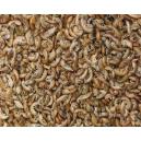 Gammarus crevettes séchées