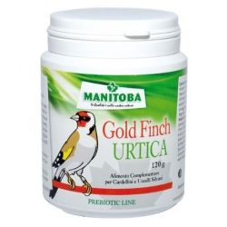 Manitoba Gold Finch Urtica