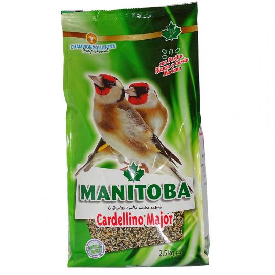 Manitoba Cardellino Ancestrale