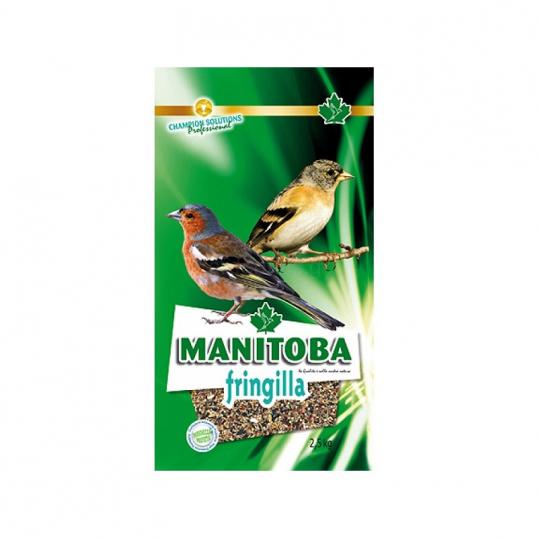 Manitoba Fringilla - Fringillidés