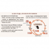 Androlis M - Anti-poux rouges naturel