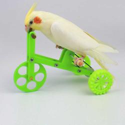 Vélo pour perruche et petit perroquet