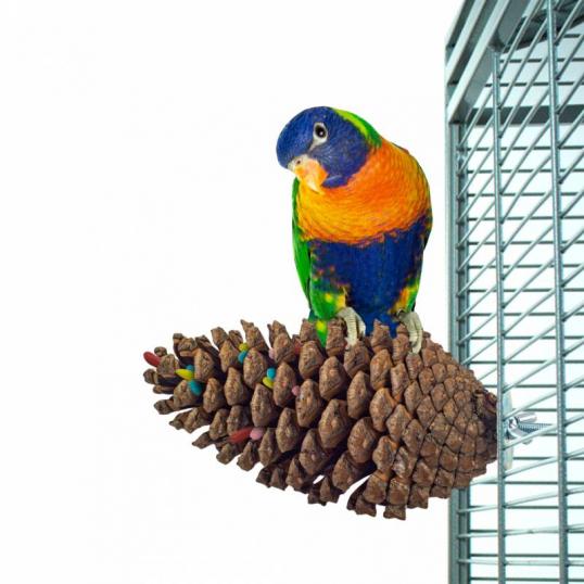 Pomme de pin Perch Foraging pour perroquet et perruche