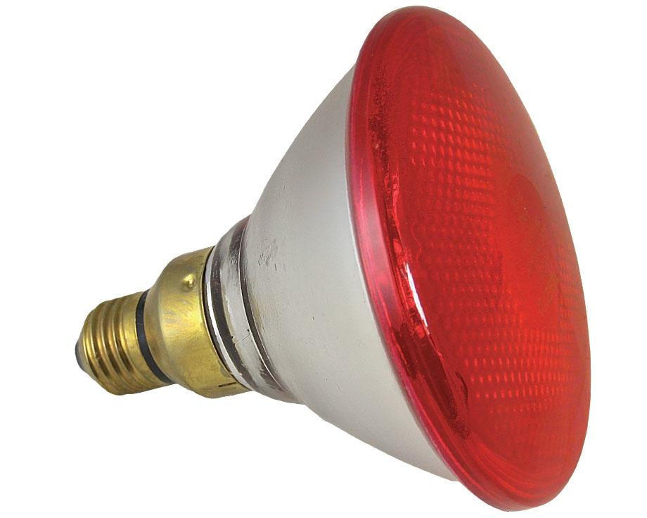 Lampe infrarouge - 100 watts