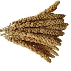 Millet en grappe français - 25 kg