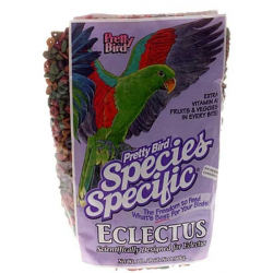 Pretty Bird Eclectus (1395)