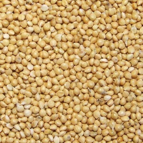 Graines de millet Jaune - 25 kg