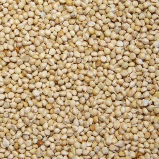 Millet Blanc 25 kg (1478)