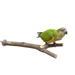 Perchoir en bois naturel - 30 cm
