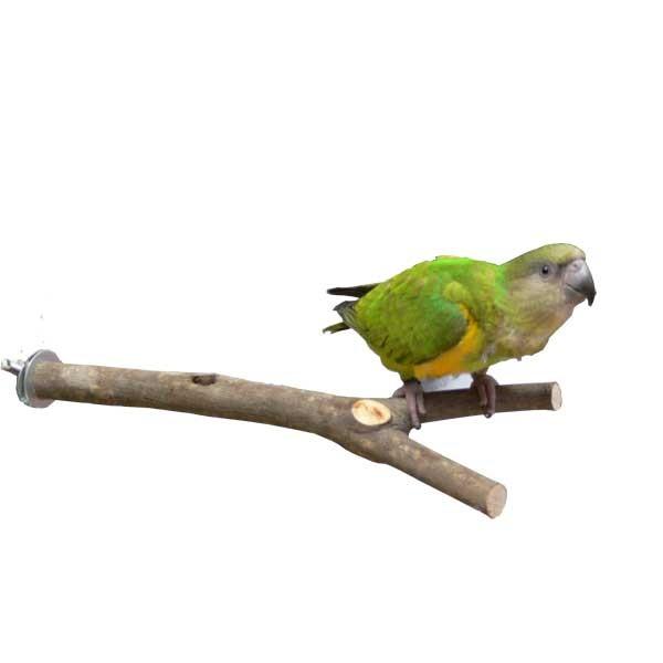 Perchoir en bois naturel - 20 cm