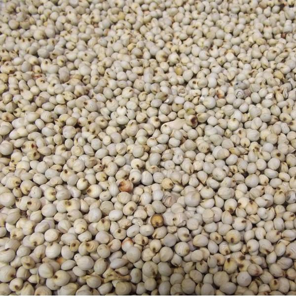 Graines de Dari blanc - 25 kg