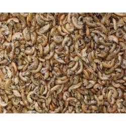 Gammarus crevettes séchées - 1 kg