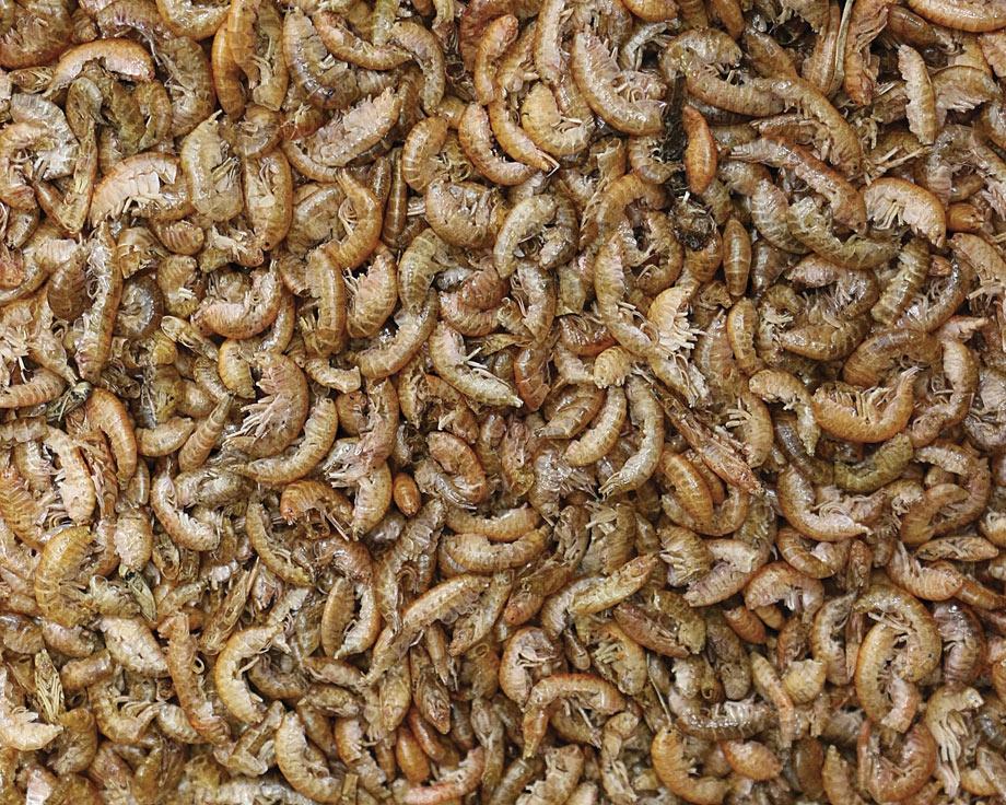 Gammarus crevettes séchées - 250 g