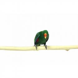 Java Perch' Long 1 mètre