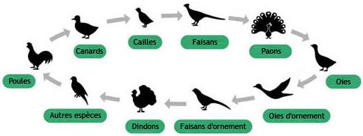 Icones des différentes espèces R-com Pro 20